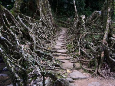 root bridge 2